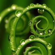 bigstock_Spiral_Plant_3791473